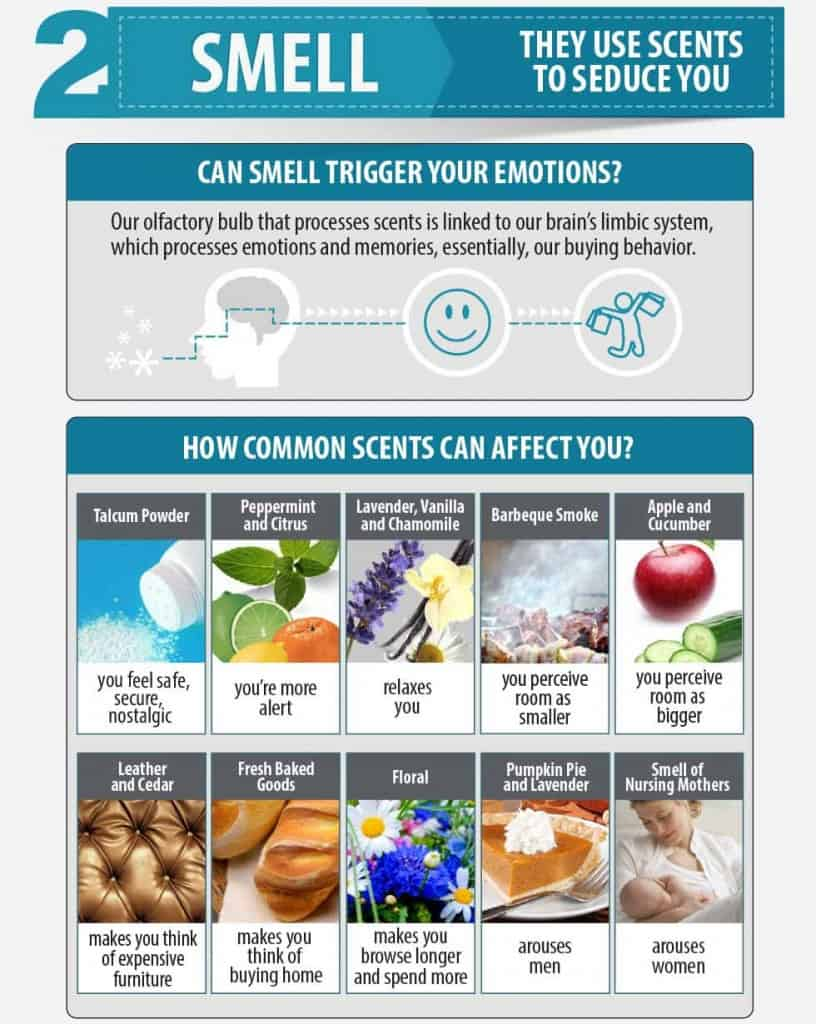 Smell Research infographic - SME Research